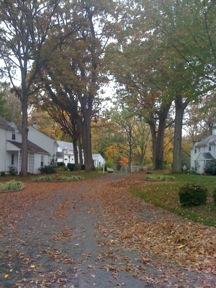 CHS drive way at fall