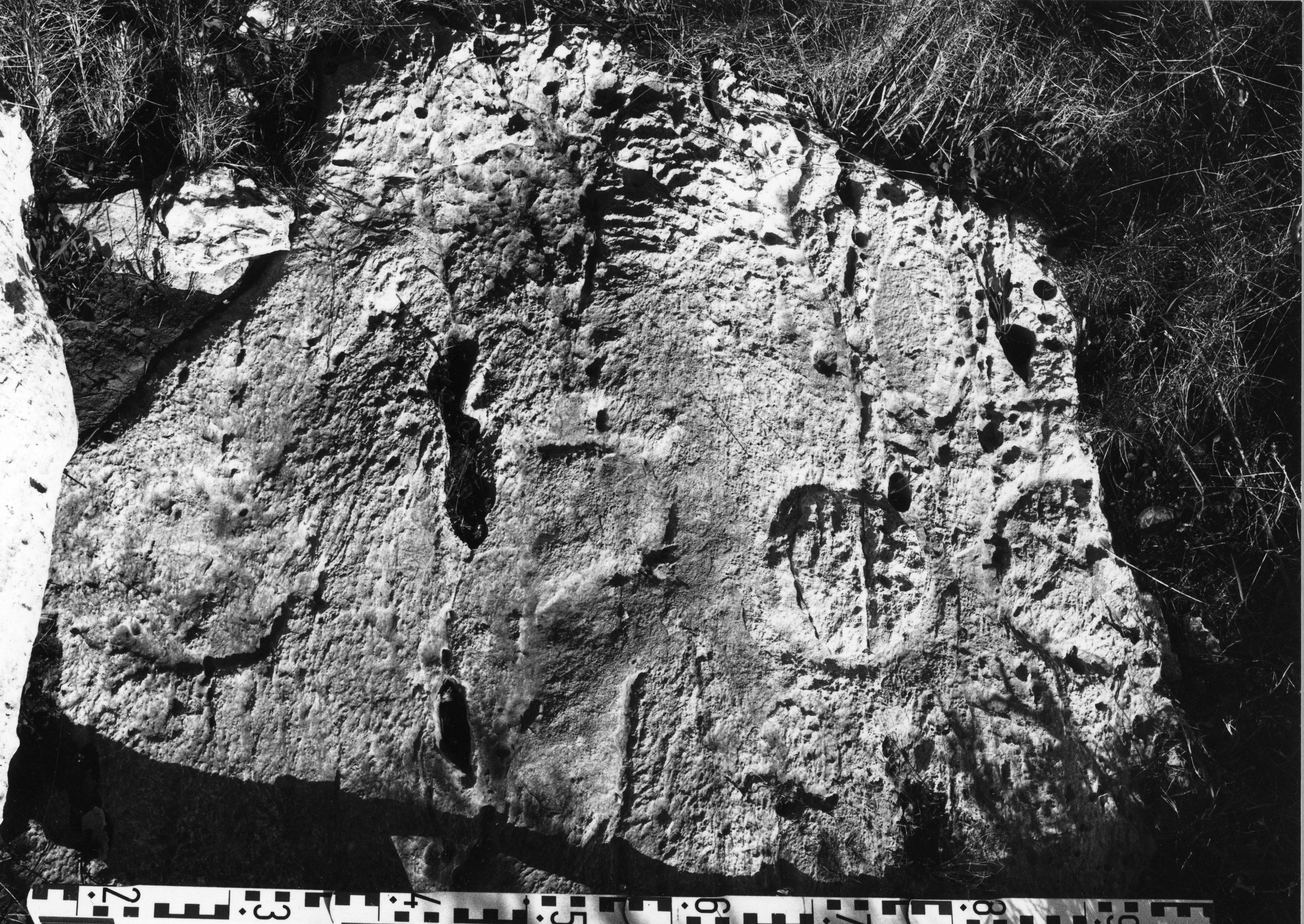 Bultrighini Fig.11g